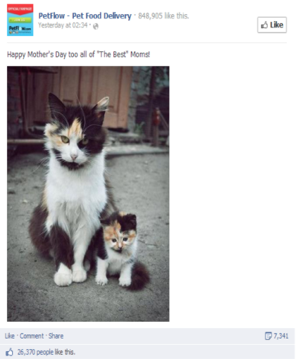 Adult female tri-color cat with tiny lookalike kitten on a Mother's Day social media post