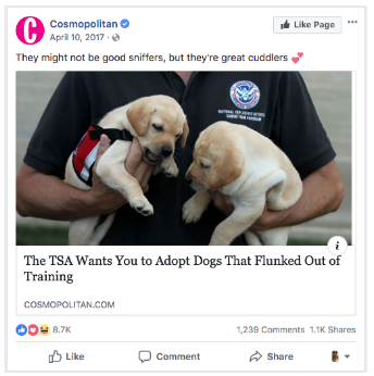 A post about adopting puppies from Cosmopolitan's Facebook page